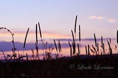 Meadow Sunset by lindag