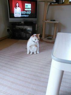 うちの猫の座り方どうにかしてくれねえかな。