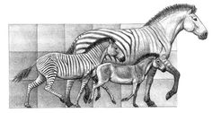 Three species of Hipparion, horse species that lived in the Iberian peninsula between 9 million years and 5 million years ago. Image via Science News/ Mauricio Antón.