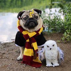 Happy Birthday, Harry Potter! ⚡️