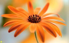 Orange passion - A little sunshine on a Winters day