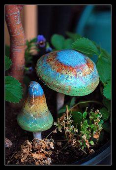 Egrow Colorful Mushroom Seeds Ornamental Plants Garden Home Planting - home plants diy Mushroom Seeds, Mushroom Art, Mushroom Fungi, Mushroom Images, Mushroom Hunting, Wild Mushrooms, Stuffed Mushrooms, Garden Mushrooms, Dame Nature