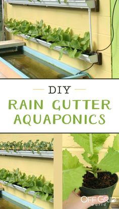 11 aquaponics systems that you can build to feed your family high diy rain gutter aquaponic system solutioingenieria Image collections