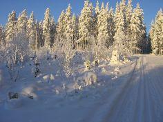 Finnish winter landscape