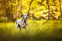 14 Excellent Photographs of Dogs Playing Around