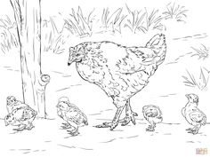 Hen Chicks Coloring Colorinenet 16692 chickens Pinterest