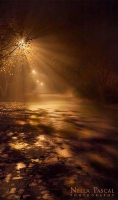 Lampost reflecting through the mist lite street.
