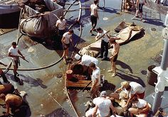 After receiving an oyster from the belly of King Neptune, the 'wog' must crawl through the garbage chute and exit with the oyster still in his mouth or return to the chute and find another. Navy Military, Military Humor, Usmc, Marines, Uss Intrepid, Uss America, Virtual Memory, Navy Chief, Go Navy