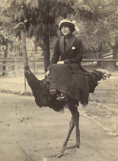 Fly ride, girl.  #ostrich #blackandwhite #photography #victorian