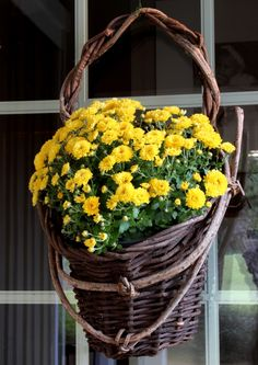 Autumn Door Basket. Good idea, Mums in a basket..makes me happy!