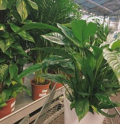 Plant Aesthetic, Plants Are Friends, Chor, Botany, Aesthetic Pictures, Houseplants, Indoor Plants, Decoration, Planting Flowers