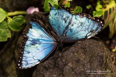Butterfly Museum, Grandkids, New Zealand, Tourism, Fun, Photography, Beautiful, Turismo, Photograph