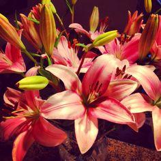 Lilies.... My Favorite Flowers.