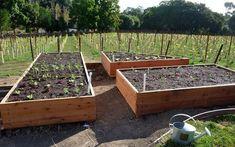 Building Vegetable Garden Box | ... Vegetable Garden   How To Build A Raised