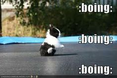 cute funny baby animal