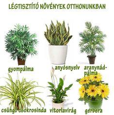 Légtisztító növények | Socialhealth