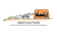 «Greyvolution» de RichSkipworth
