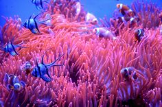 COLORI SOTT'ACQUA | Dimensione: 693.73k | Risoluzione: 1024x678 | Copyright:   | Nikon Club Italia Forum > Galleria > COLORI SOTT'ACQUA > Il mondo marino e i suoi colori
