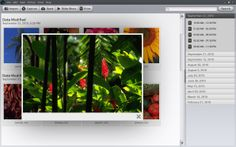 Photo organizing software interface.
