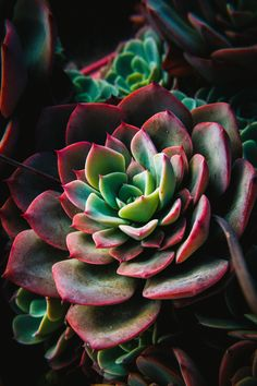 Superb Nature - matialonsorphoto: this things are magnificent Succulents Wallpaper, Cacti And Succulents, Planting Succulents, Planting Flowers, Amazing Gardens, Beautiful Gardens, Beautiful Flowers, Echeveria, Natur Wallpaper