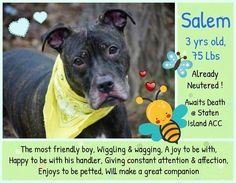 SALEM – A1100387  Saddest dog grieving for his lost family is on death list today! If you would like to foster or adopt and can't make it to the shelter, please write an email NOW to the Urgent Help Desk at Helpdogs@Urgentpodr.org Their experienced volunteers will assist you one-on-one with rescues and the application process. Transport can be arranged by rescues to the homes of approved fosters or adopters within 3-4 hours of New York City