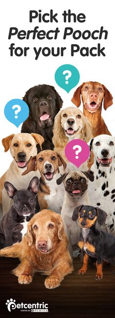 Finding the right dog for your family can be a real challenge. Visit Petcentric.com to see its list of the best breeds for you. Check out this helpful resource if you're picking a new puppy or adopting an adult dog.