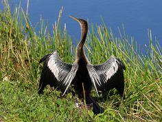 everglades national park   Everglades National Park