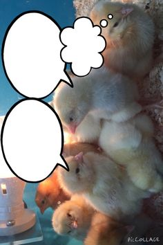 Chick conversation EYFS mark making