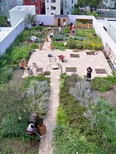 Feed the people: rooftop garden