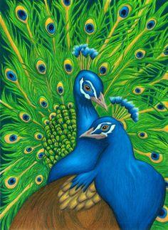 Tina Boadway - Prismacolor pencils <3 peacocks <3