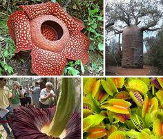 Google Image Result for http://webecoist.com/wp-content/uploads/2008/11/rare-endangered-flowers-plants.jpg