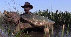 giant snapping turtle - Google Search