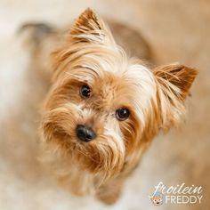 Regen regem regem und jede Menge Wind!  Ich hatte einen schönen (aber nassen) Nachmittag mit einer Kollrgin in der Stadt und war dann noch eine schöne Runde mit Freddy (aka Alfi) und der Nachbarin gassi. ;) Ist bei euch sich so windig? Also hier ist verrückt!!! #Hund #Hundeliebe #yorkie #yorkshireterrier #terrier #yorkiegram #yorkiedeutschland #terrierliebe #hundefotos #hundetricks #jena #germanblogger #hundeblog #blogger_de #instablogger_de #yorkieliebe #yorkiemama #hundejunge…
