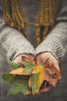 A woman wearing a sweater holding a handful of leaves. by Robert Zaleski for Stocksy United