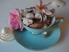 beachcomber: shell tea cup