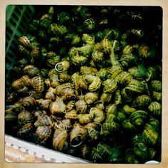 Living snails in spanish food market. food