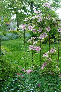 clematis :) *** One of the three trellises around the Circle Lawn. This one is covered in Clematis 'Nelly Moser,' which took a journey across PA to arrive here. Garden Yard Ideas, Love Garden, Dream Garden, Garden Art, Garden Design, Unique Gardens, Back Gardens, Beautiful Gardens, Outdoor Gardens