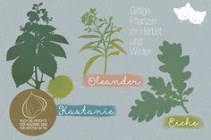 Für Katzen giftige Pflanzen im Herbst und Winter