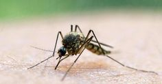 Neue Nachricht: Mittel gegen Mücken und Zecken - Stiftung Warentest:Viele Schutzmittel helfen - http://ift.tt/2qiRopT #nachrichten