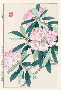 Rhododendron by Yuichi Osuga from Shodo Kawarazaki Spring Flower Japanese Woodblock Prints