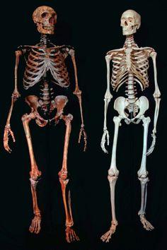 man and neandertal