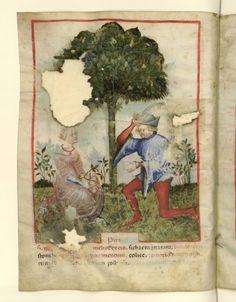 Tacuinum Sanitatis (BNF Nouvelle acquisition latine 1673), c. 1390-1400