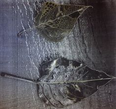 Elaborated leaves photo