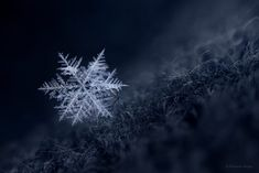 Macro Photography In Winter: How To Photograph Snowflakes #photography #phototips https://sleeklens.com/macro-photography-in-winter-how-to-photograph-snowflakes/