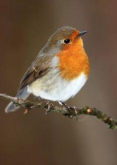 Robin..