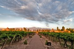 Insider's Travel Guide to Mendoza, Argentina's Wine Country South America Destinations, South America Travel, Mendoza, Travel Around The World, Around The Worlds, Chile, Rio, Argentina Travel, Roadtrip