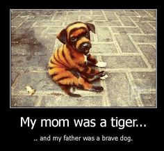 Funny Animal Pictures - View our collection of cute and funny pet videos and pics. New funny animal pictures and videos submitted daily. Friday Funny Pictures, Funny Animal Pictures, Animal Pics, Funny Animal Quotes, Funny Animals, Cute Animals, Funy Quotes, Animal Jokes, Dog Quotes