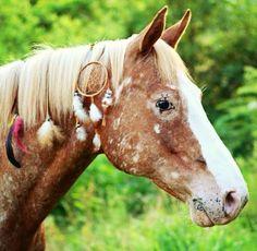 western quarter paint horse appaloosa equine tack cowboy cowgirl rodeo ranch show ponypleasure barrel racing pole bending saddle bronc gymkhana