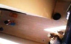 Taís Paranhos: Enfermeira que espancou e matou cadela Yorkshire é condenada a prestar serviços...