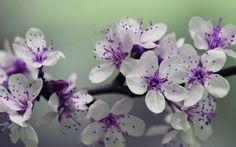 Purple-white flowers wallpaper